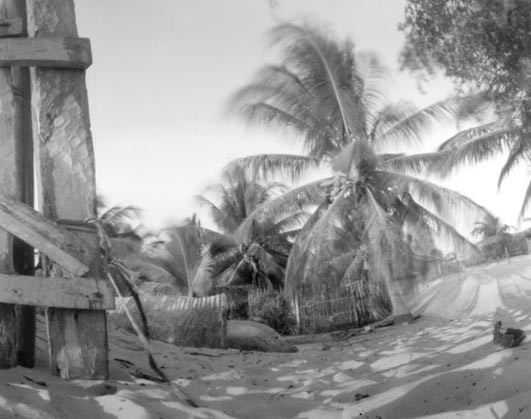 Pinhole made in Madagascar of a palm tree of Belo sur mer